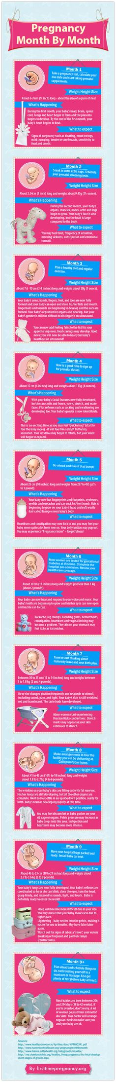 Pregnancy Month By Month Infographic