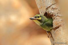 Фотография Baby Bird автор Sasi - smit на 500px