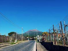 Vesuvio; vigneti Lacryma Christi del Vesuvio