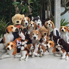 Will the real beagle (s) bark out loud!