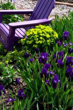 Photo: euphorbia and dwarf iris