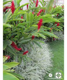 First-Rate Backyard Garden Layout Herbs Ideas Balinese Garden, Bali Garden, Backyard Garden Landscape, Small Backyard Gardens, Small Gardens, Dream Garden, Garden Plants, Garden Grass, Modern Gardens
