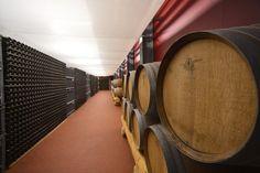 Locale di affinamento spumante e maturazione in legno del Pinot nero Vigna di Saosent
