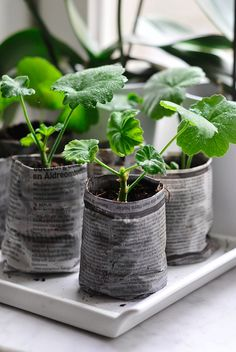 bio-degradable planters