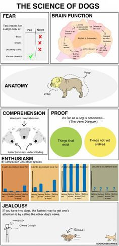 The science of dogs. Pretty accurate. (Although mine is much smarter. Lol.)