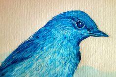 Mountain Bluebird 3