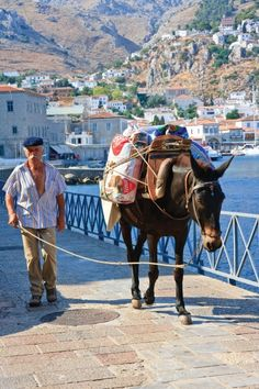 Rode a mule up the hill in Santorini on my honeymoon! Mykonos, Beautiful Islands, Beautiful World, Beautiful Places, We Are The World, People Around The World, Places To Travel, Places To Go, Greek Culture