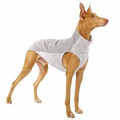 Large Dog Clothes, Pet Clothes, Dog Clothing, Dog Branding, Dog Furniture, Dog Pajamas, Dog Clothes Patterns, Dog Jacket, Dog Diapers