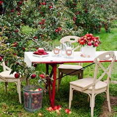 Apple Orchard Wedding Reception