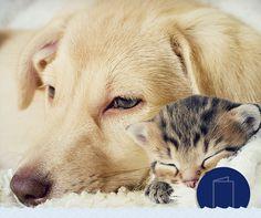 Σκύλος ή γάτα ή και τα 2; Όποια κι αν είναι η απάντησή σας, οι αγαπημένοι τετράποδοι φίλοι σας είναι πάντα ευπρόσδεκτοι στα πλοία μας. http://www.minoan.gr/page/1339/alles-ypiresies   Are you a dog person, a cat lover or both? No matter your answer, your pets are always welcome aboard our fleet. http://www.minoan.gr/en/page/1438/other-services