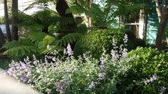 Garden designer, Agata Byrne, Art House, Dalkey, Ireland, 2012
