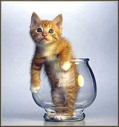 chat-poisson ?... poisson-chat ?... chat qui a mangé le poisson ?!?...