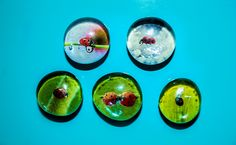 Ladybugs Glass Button Magnets Set of Five. via Etsy.