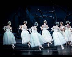 """Compañía Nacional de Danza de México                    National Dance Company of Mexico""""Giselle"""""""