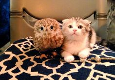 adorable owl and kitten are friends