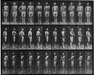 eduard muybridge - Bing Images