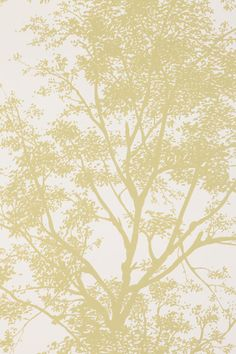 Tree Shadow Wallpaper  #UrbanOutfitters- for bedroom