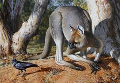 Procoptodon lived in the ice age in australia. It was 9 feet or 3 meters tall. Very fast, however had many predators. megalania humans and thylacoleo. Kangaroos can jump 44 miles an hour so we can assume procoptodon could jump 47 miles an hour. Thylacoleo was it's main predator. mainly because thylacoleo can ambush. megalania hunted diprotodon.