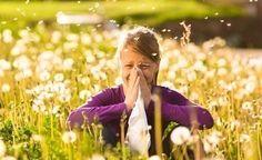 (Zentrum der Gesundheit) - Heuschnupfen ist im Frühjahr Ihr ständiger Begleiter? Schütteln Sie ihn ab, indem Sie die richtigen Lebensmittel essen! So lindern beispielsweise Lebensmittel mit reichlich Vitamin C und Folsäure die allergiebedingten Entzündungsreaktionen. Bestimmte Kräuter sind darüber hinaus ähnlich wirksam wie die typischen Allergie-Medikamente. Lernen Sie jetzt die zehn besten Anti-Heuschnupfen-Lebensmittel kennen!