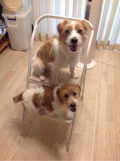 Dog Parkour by Baty & Bruna Buttercup
