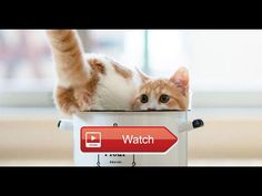 Cute CATS Doing Funny Things Compilation  Cute Cats Doing Funny Things Compilation Hope you like a new funny cute cats videos compilation These funny cute animals will make you laugh  on Pet Lovers