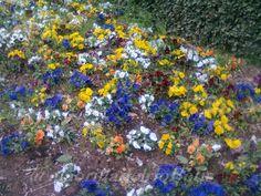 alaorilladelrioBetis: A traves de mi camara 4 flores en invierno
