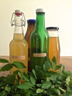 Rezept für Kräutersirup aus Giersch von: Wilder Wegesrand (Copyright: wilderwegesrand.de)