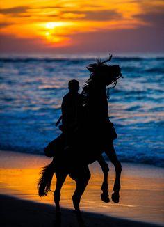 Horse Silhouette - Sunset