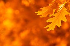 Peak Fall Foliage Dates.  Good to know for when to capture great photos!