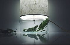 Inventive Terrariums Inserted Under Paper Lamps
