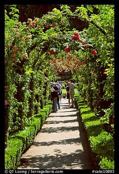 Arbour and path in Rose Garden. Butchart Gardens, Victoria, British Columbia, Canada (color)