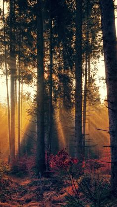 Forest, trees, sunbeams, nature, 720x1280 wallpaper
