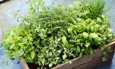10 Flavorful Herbs You've Been Missing Out On - not used enough here...delicious!