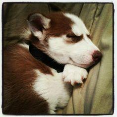 Sleeping beauty!!