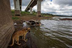 Olha só a sujeira que é na Cantareira. Até cachorro e sucata tem naquela água. Foto: Tiago Queiroz/Estadão