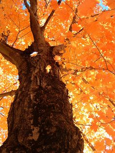 Amazing colors and a big tree trunk. Orange Twist, Orange Color, Orange Orange, Orange You Glad, Orange Is The New, Nature Pictures, Beautiful Pictures, Autumn Nature, Aesthetic Backgrounds