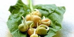 Pěstujte si vitamíny doma v misce Herbs, Fruit, Health, Lifestyle, Health Care, Herb, Salud, Medicinal Plants