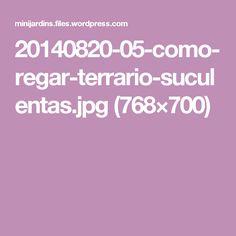20140820-05-como-regar-terrario-suculentas.jpg (768×700)