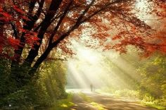 The sun comes back everyday  with new and powerful secrets.~Rumi♥