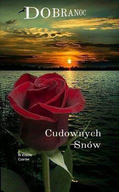 Humor, Flowers, Polish, Humour, Funny Photos, Funny Humor, Comedy, Lifting Humor, Jokes