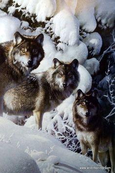 Artist Carl Brenders Unframed Wolf Print The Long Distance Hunters
