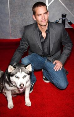 Rest in peace Paul Walker, Fast and Furious will never be the same without you! I will never forget my favorite movie with you in it, Eight Below, that was the best but my all time favorite ones are the Furious movies. You were an amazing actor. RIP Brian O Conner!!