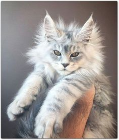 Interested in owning a Maine Coon cat and want to know more about them? The Maine Coon kitten adoption will be a great choice. Certainly unique, this coon kitten is fabulous. Cute Cats And Kittens, Baby Cats, Kittens Cutest, Newborn Kittens, Funny Kittens, Cutest Kitten Breeds, All Cat Breeds, Kittens Playing, Gato Maine