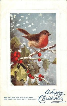robin in snow, with holly