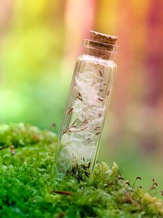 little bottle of wishes - It's magic by *Pamba on deviantART