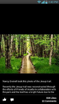 Jessup Trail, Acadia National Park
