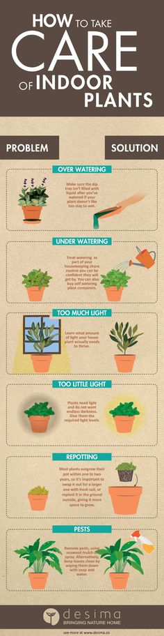 Infographic on how to take care of indoor plants.