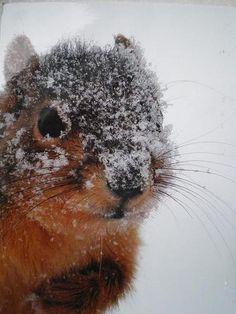 Tiere im Schnee by zimtschnecke28, via Flickr