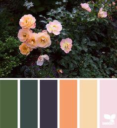rosebush hues Colour Pallette, Color Palate, Colour Schemes, Color Combos, Color Patterns, World Of Color, Color Of Life, Color Concept, Design Seeds