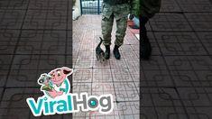 Turkish Military, Dog Cat, Kitten, It Works, Advertising, Shorts, Cats, Cute Kittens, Kitty